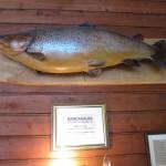 15,5 kg 2003 (henger utstoppet på Hotel Dalen)