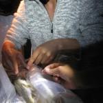 Eivind Schartum opererer inn sender på fisken