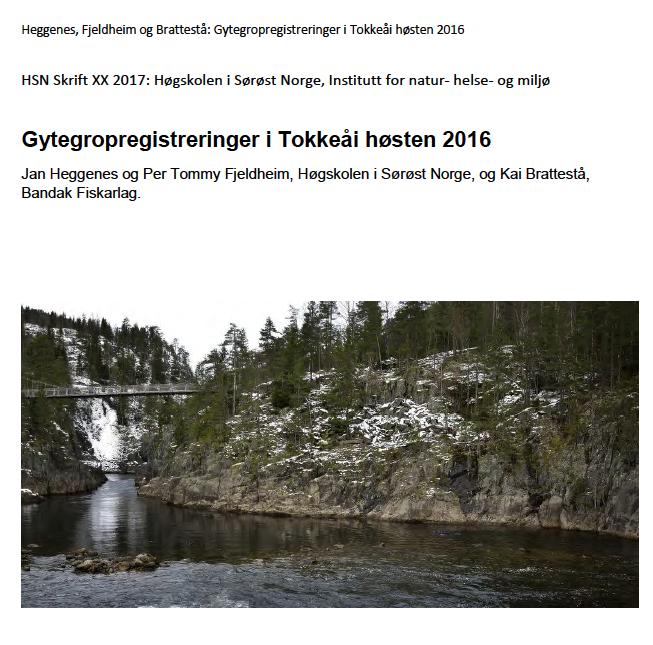 Forsiden på rapporten om gytegroptellingene 2016